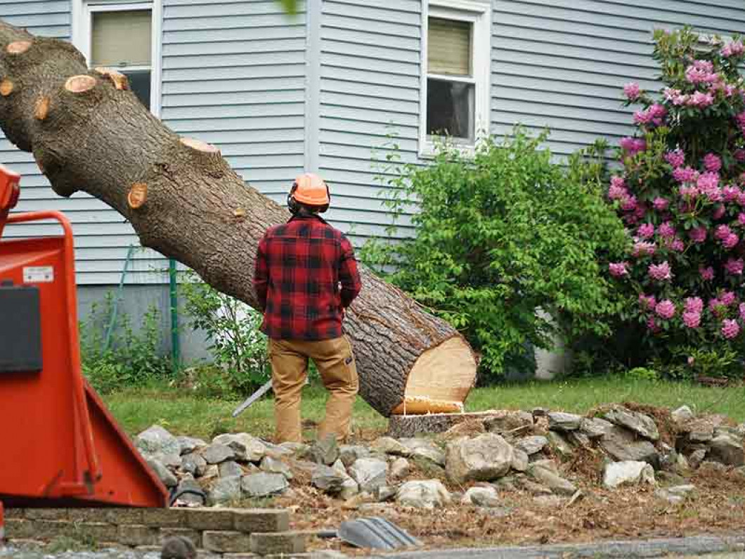 When should you take down a tree or remove a tree limb?