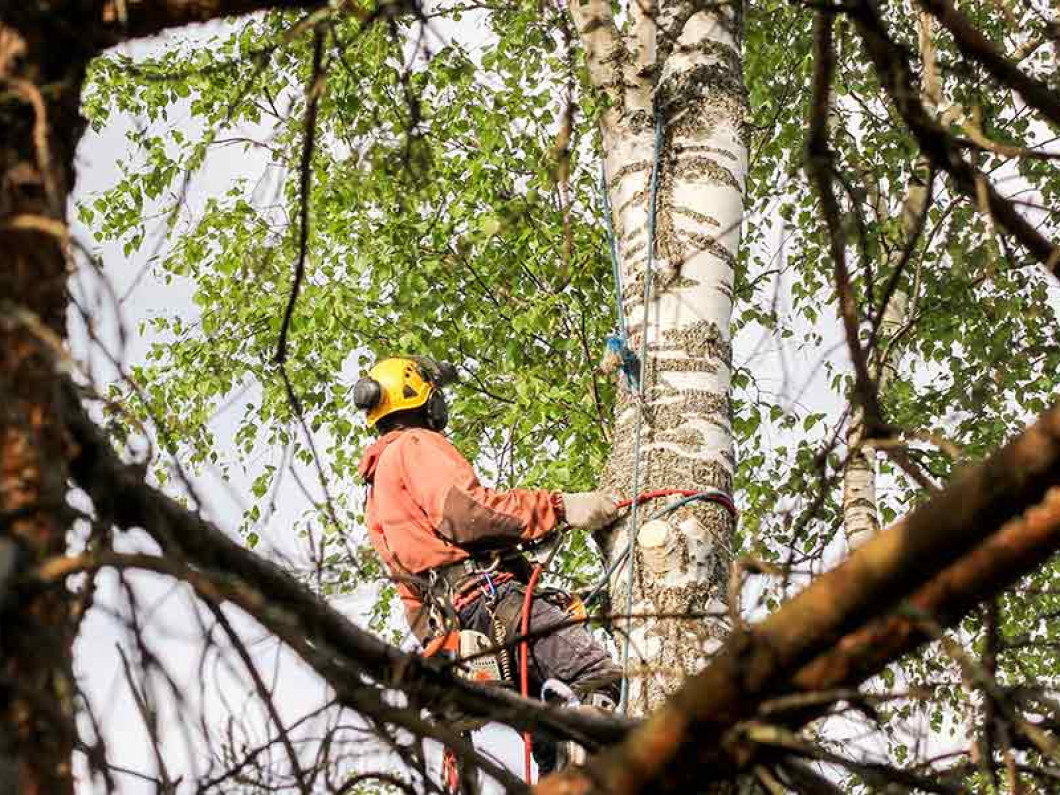 Why is tree trimming so important?